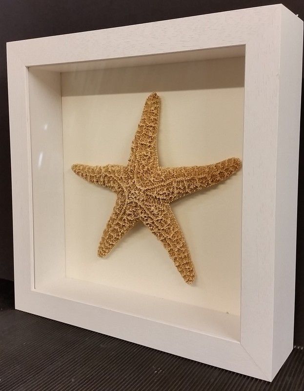 Starfish framed in deep shadow box