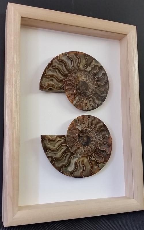 Ammonites framed by Bespoke Framing