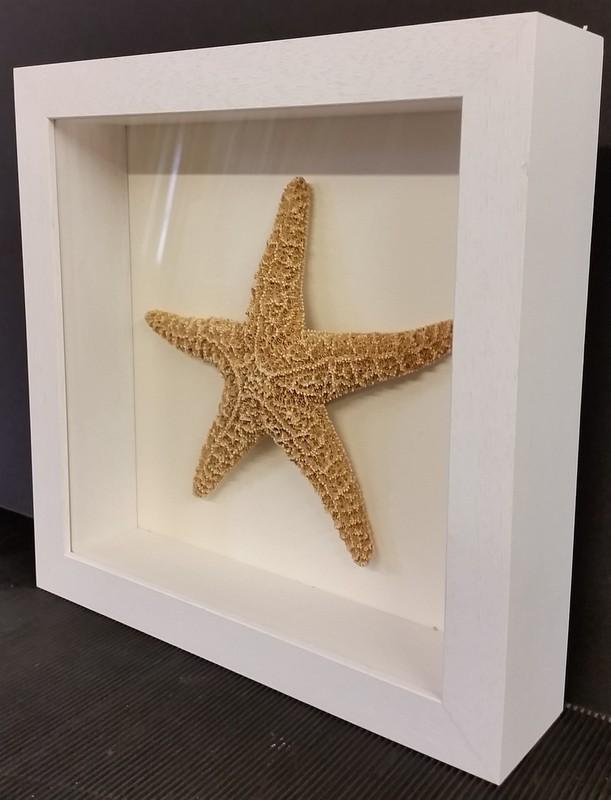 Starfish framed in deep shadow box
